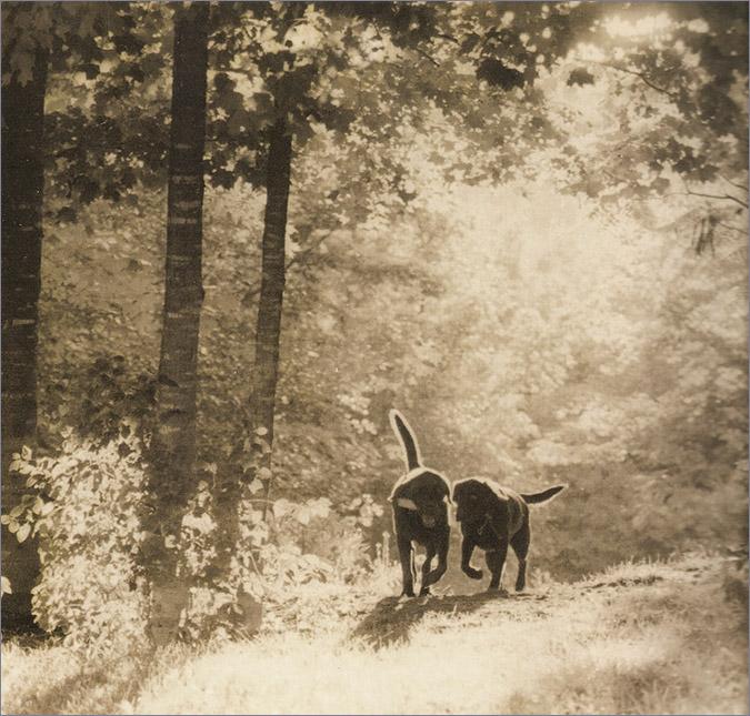 Notes from the Pack - a dog blog. Labrador Retreivers.
