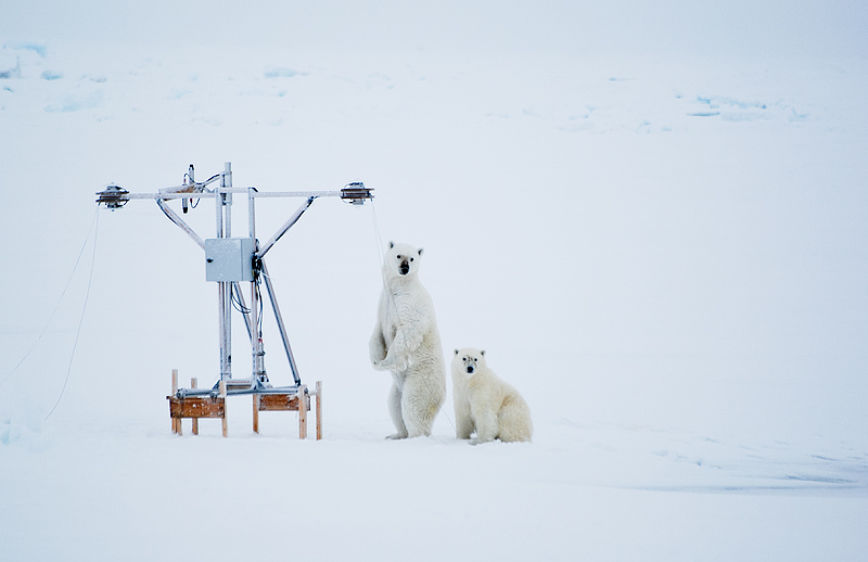Polar bear versus science