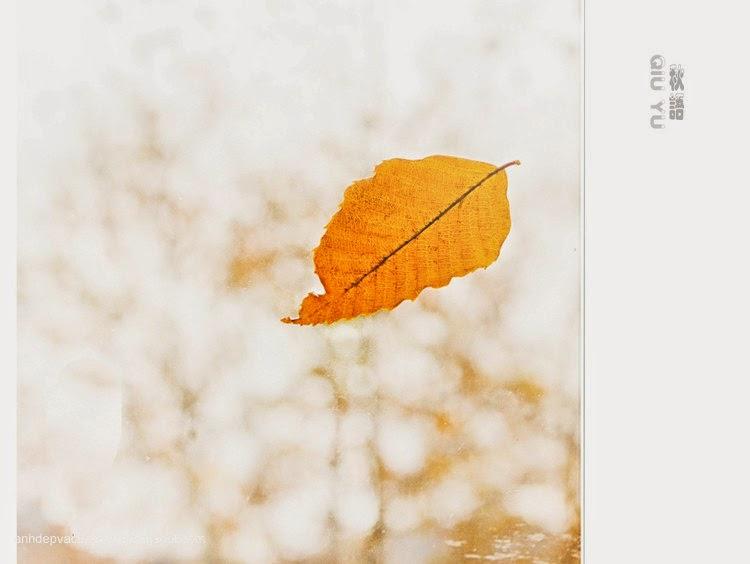 Chiếc lá mùa thu 1