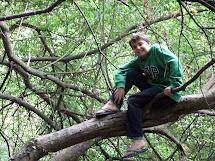 Tree Climbing Barefoot