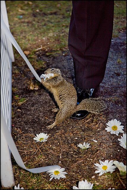 IMAGE: http://2.bp.blogspot.com/-b8b3zX1SSMQ/T5eIMIGNWLI/AAAAAAAACXk/JwLzO2KHcgQ/s640/2012-04-24_014.jpg