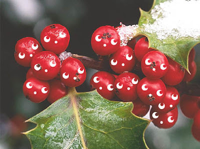 It's some kawaiified holly berries!
