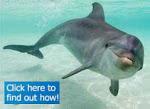 Adopt A Dolphin ...