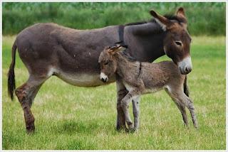 http://dayahguci.blogspot.com/2015/11/kisah-mengharukan-keledai-dalam-sumur.html