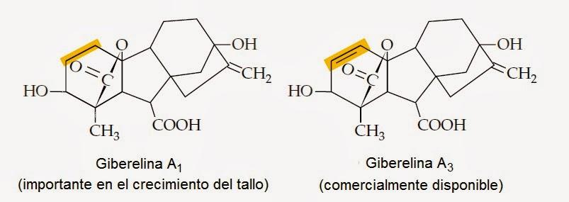 Giberelinas | Apuntes de Fisiología Vegetal