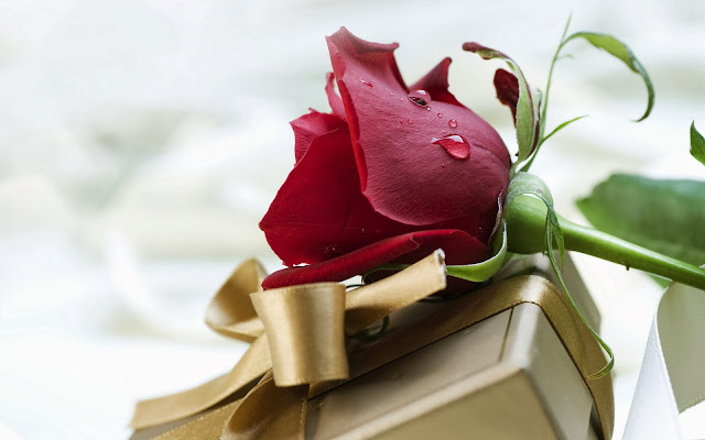 Rosas Rojas para San Valentin