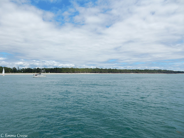 Wild dolphins in Tauranga New Zealand - Love Travel Linkup
