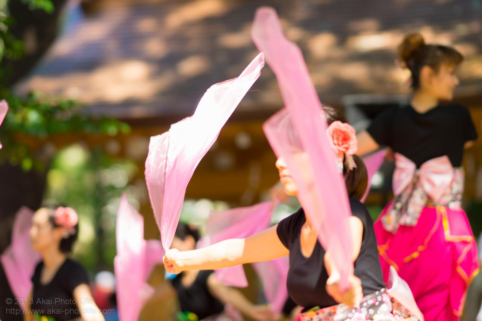 調布よさこい2013 仙桜童