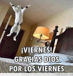 gato saltando sobre una cama porque es viernes