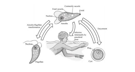 Brain-eating Amoebas Thrive In US Lakes As Global Warming Heats Waterways