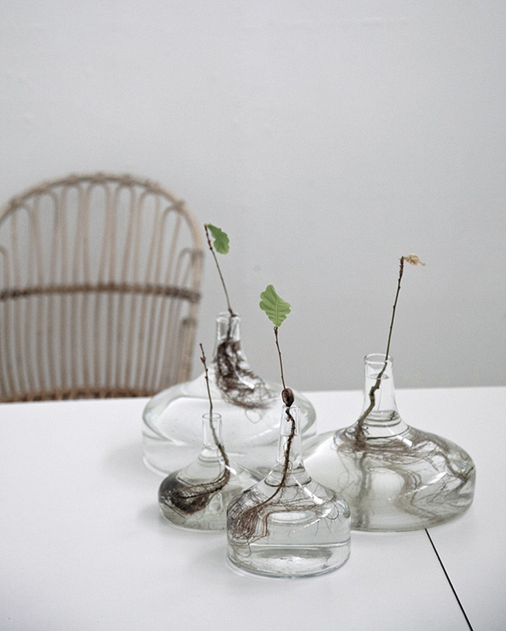 glass bottles with leave plants