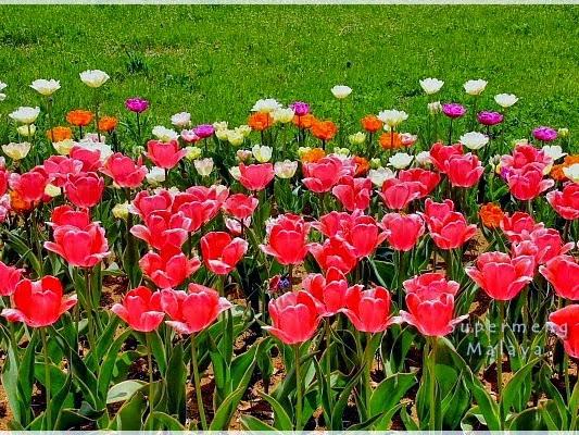 Cabaran 30 Entry : Hari  29 : Bunga Kegemaran dan ertinya kepada anda