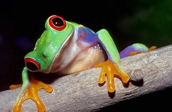 De ranas bonitas - Imagui