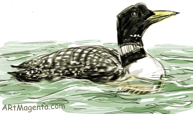 Yellow billed Loon sketch painting. Bird art drawing by illustrator Artmagenta.