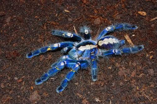 VogelspinnenReptilien und WirbelloseTiere April 2015