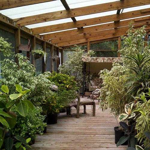 The Rainforest Garden A Saunter Through A Sunroom