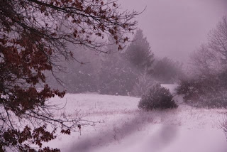 Purple fog: Winter wonder