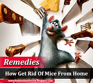How Get Rid Of Mice From Home