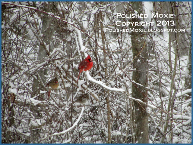 Picture of cardinals and finch perched in a snowy bush.