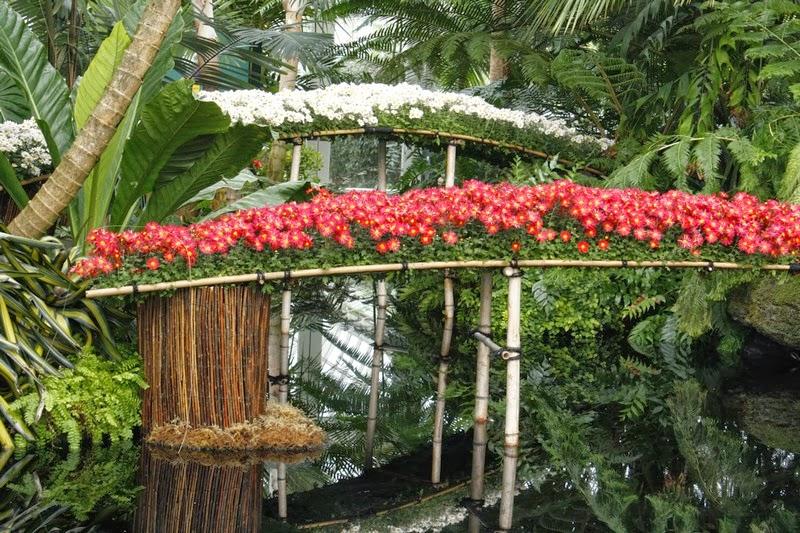 pampas2palms: Kiku - a celebration of chrysanthemums