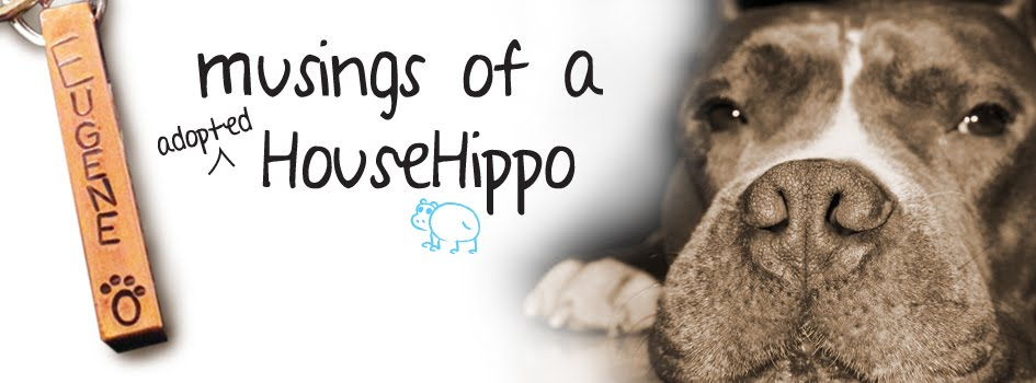 Musings of a HouseHippo