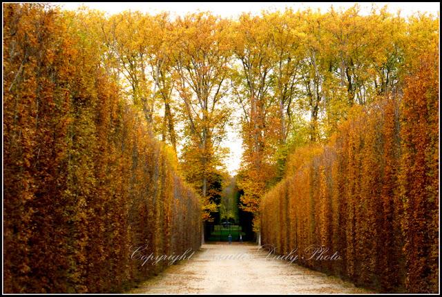 Allée des Prés autumn automne château de Versailles