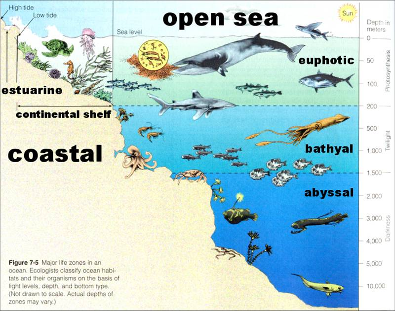 Under the sea ocean zones for Ocean floor description
