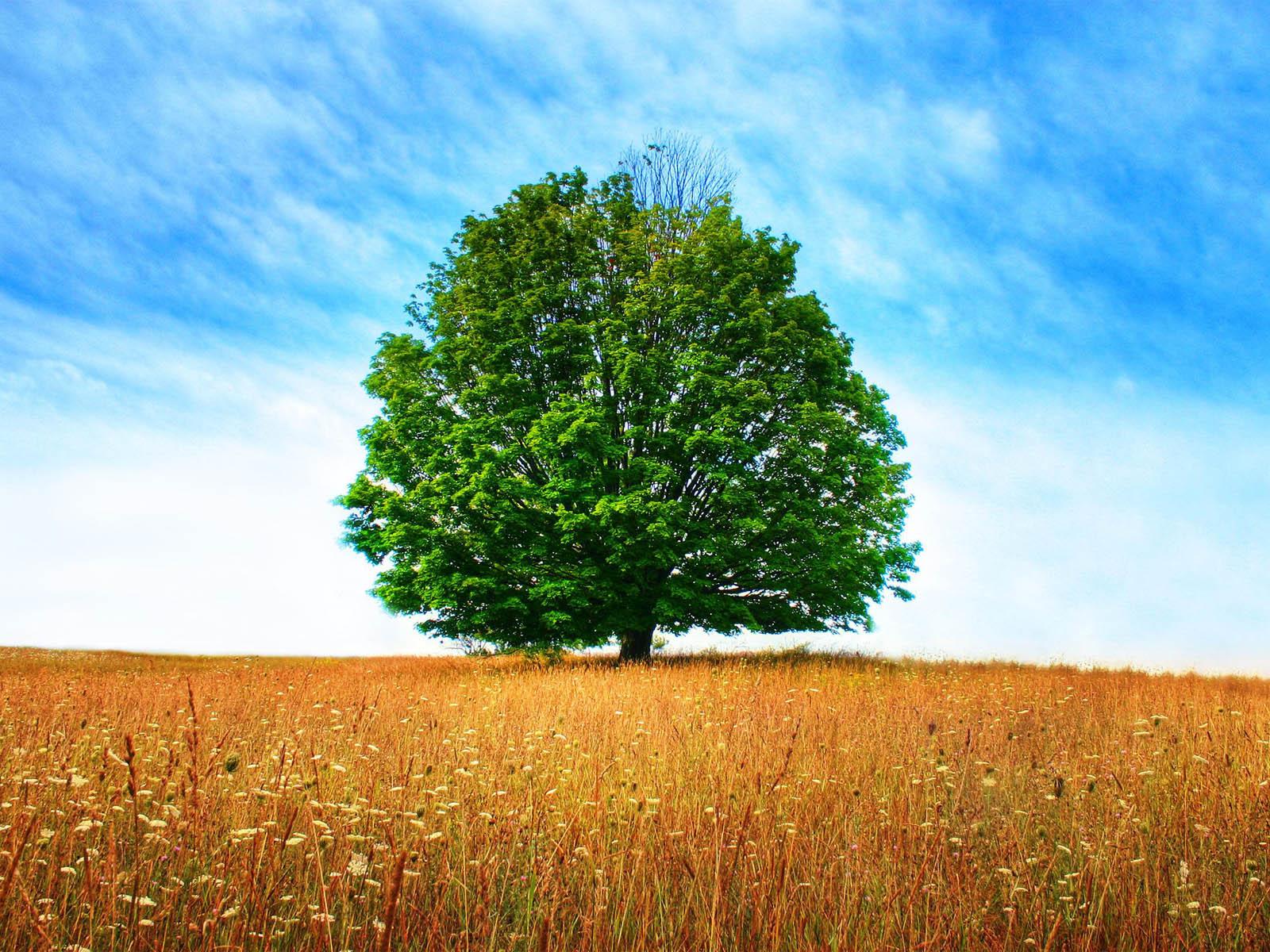 wallpapers tree in field