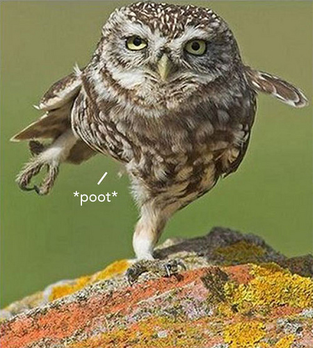 Owl Funny Cute Bird