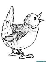Mewarnai Gambar Burung Berkicau
