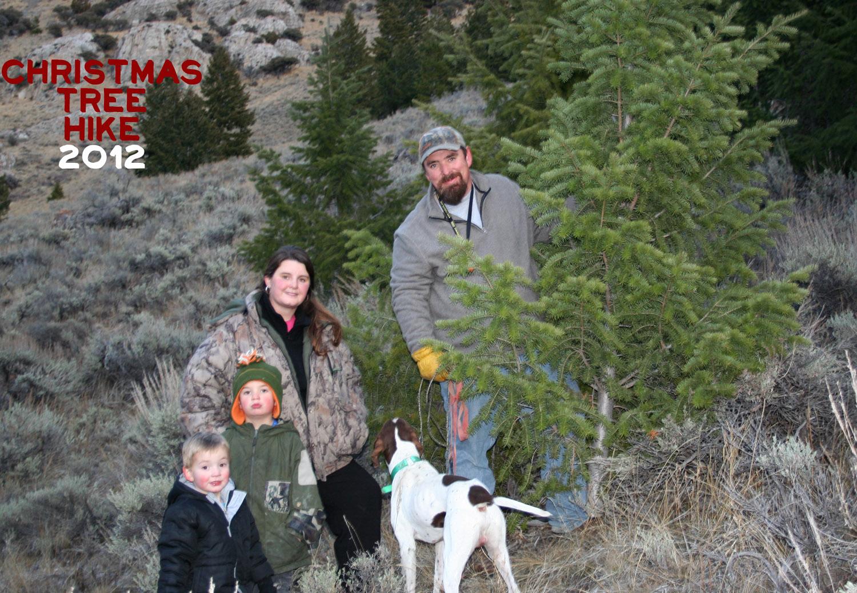 Thanksgiving Tree Trip Family