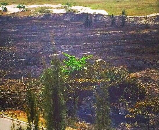 Área verde da Praia das Dunas é queimada em Cabo Frio