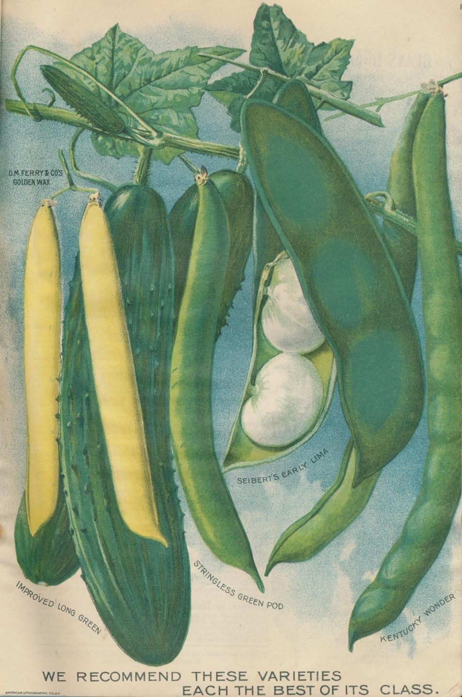 http://2.bp.blogspot.com/-bEV47JuUZDo/UxusYfmVSHI/AAAAAAAAN08/wleodyeeHYk/s1600/beans.cv.jpg