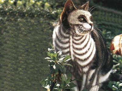 gato disfrazado para halloween