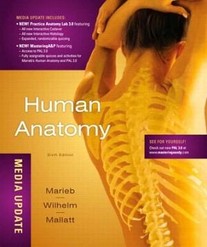 marieb anatomy test bank chapter 21 | PDF Manual