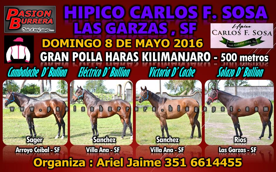 LAS GARZAS - 8 - POLLA 500