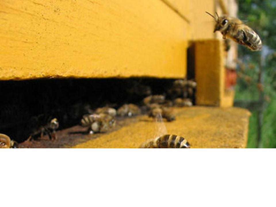 España. Polinización y dificultades para la apicultura en Valencia ...