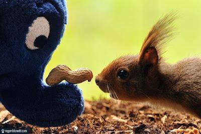 Photos droles et insolites Animal – Ecureuil v67
