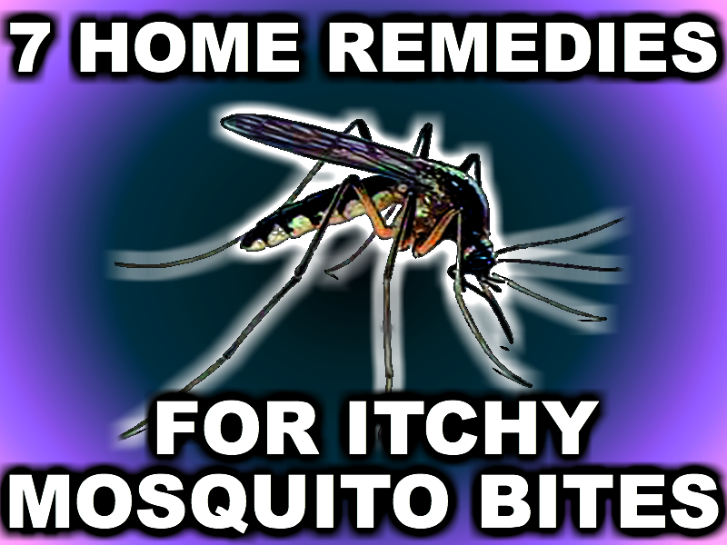The City Girl Gardener 7 Home Remedies For Itchy Mosquito