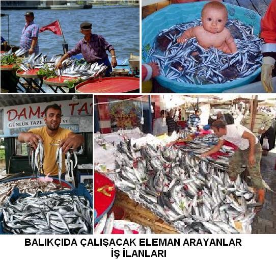 Balıkçılık iş ilanları balıkçıda çalışacak eleman arayanlar