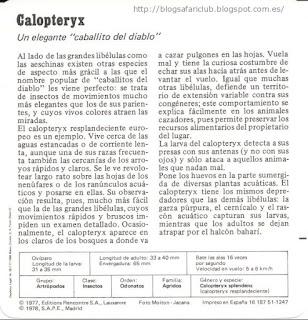 Blog Safari Club, características del Calopteryx
