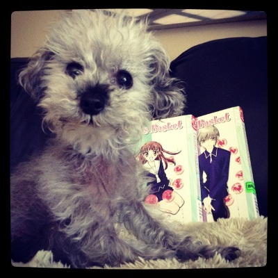 Murchie sits on a sheep-shaped pillow, his neck stretched upwards and his head at a curious angle. He has a proud expression on his face. Behind him are two volumes of Fruits Basket. Each features a young Japanese person in a blue school uniform on its cover.