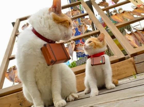 foto kucing lucu bernama Nyalan dan Deshi