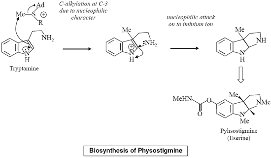 Biosynthesis of Physostigmine
