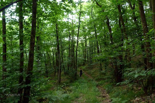 Redes Natural Park Castañetu Montes Asturias Spain