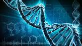 נפלאות הבריאה DNA