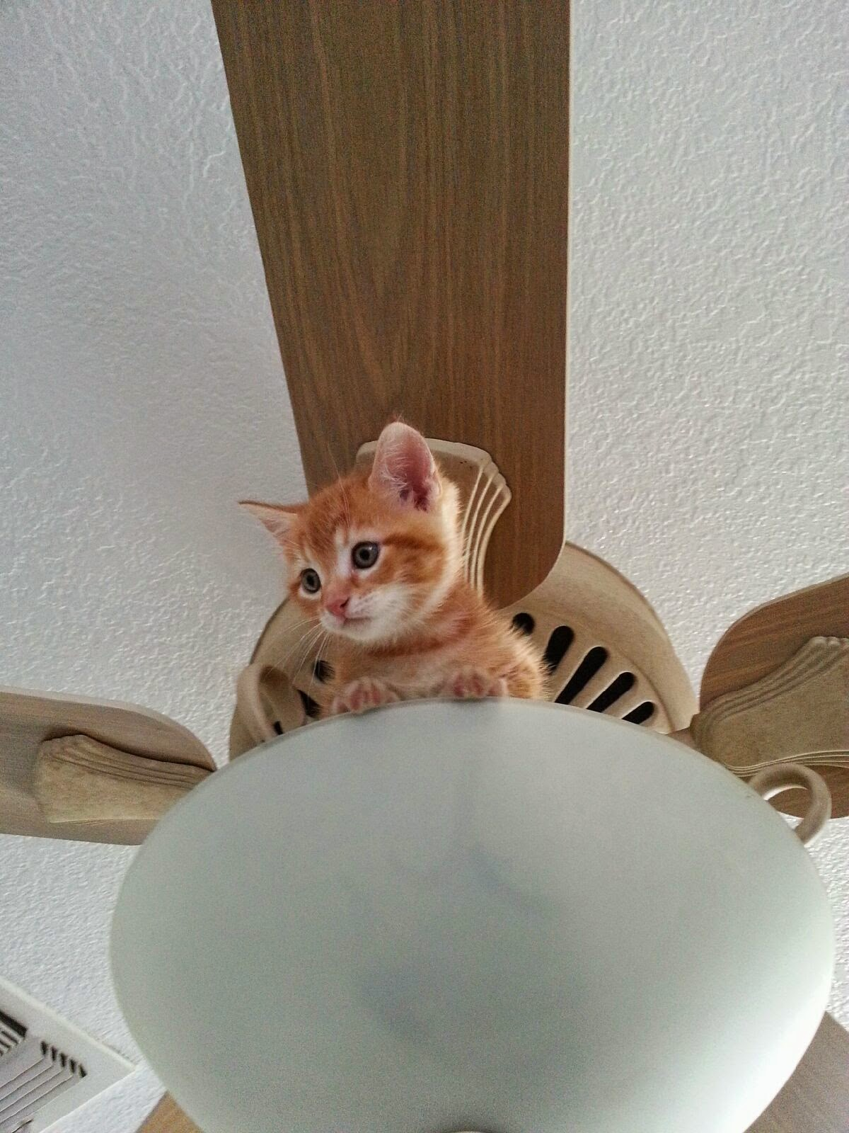 Funny cats - part 96 (40 pics + 10 gifs), cat pictures, kitten stuck on ceiling fan