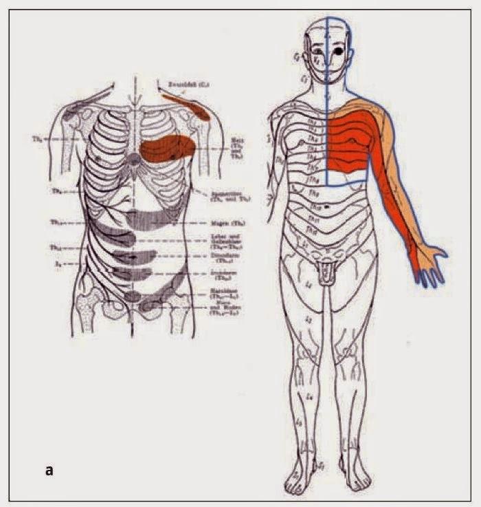Para Zusanli: BIOTERRITORIOS - Los mapas del cuerpo