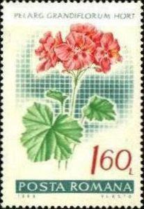 1968 Posta Romana - Pelargonium Grandiflorum, Muscata