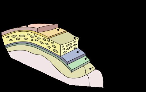 Unidad 3. Meninges - Anatomía de Sistema Nervioso